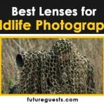 Best Lenses for Wildlife Photography (Canon & Nikon) in 2020: Reviews & Buyers Guide