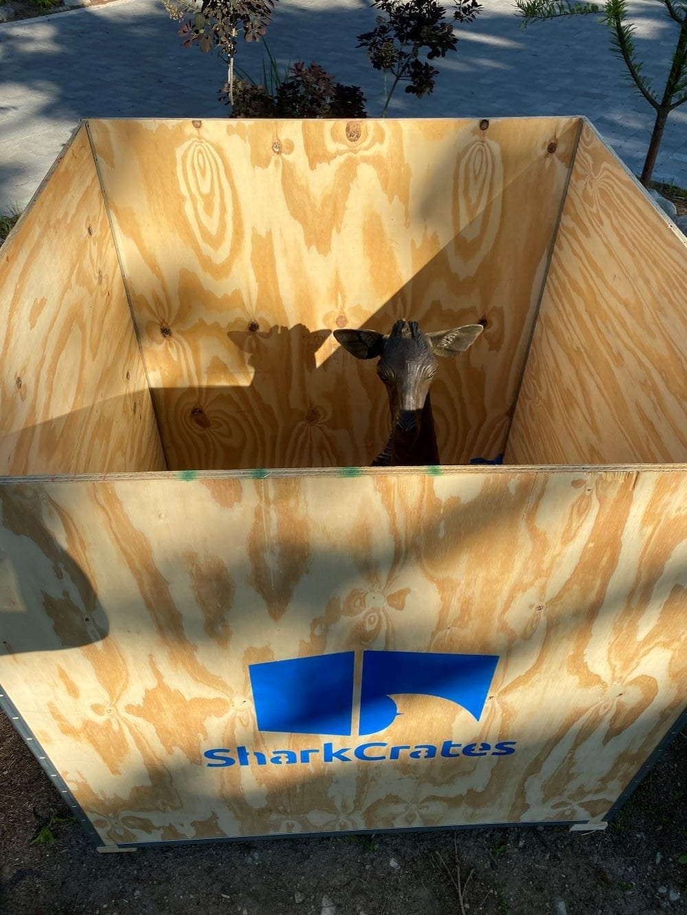 Giraffe poking its head out of the SharkCrate